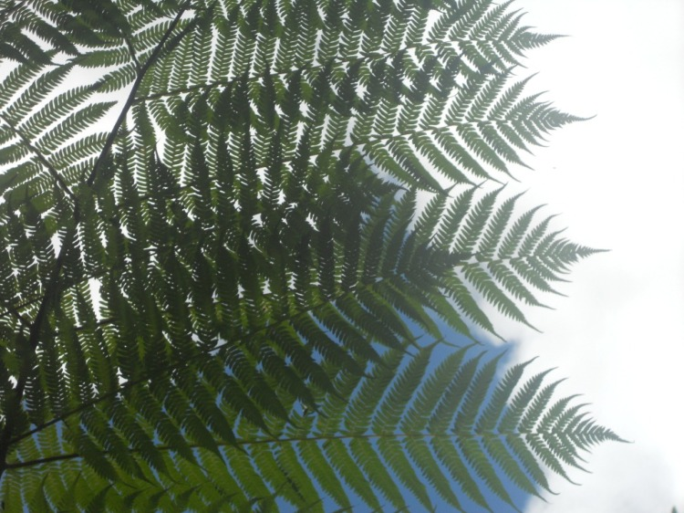 Giant Fern Patterns