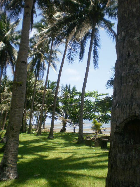 Coconut Grove by the Beach in Bulusan