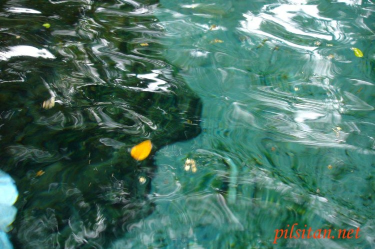 Bulusan Water Gallery