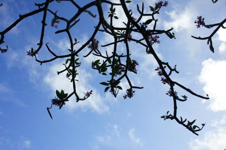 Kanda in Bloom