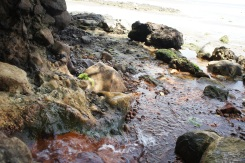 Mini rivulets of hot flowing waters leave its track to the sea with a reddish-hue. The waters has a rich mineral taste to it and the smell can only be described as volcanic in origin.