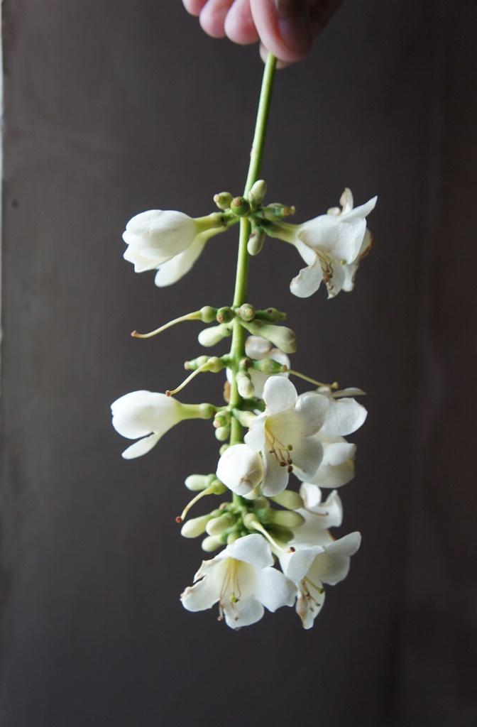 Kuliba-o flowers