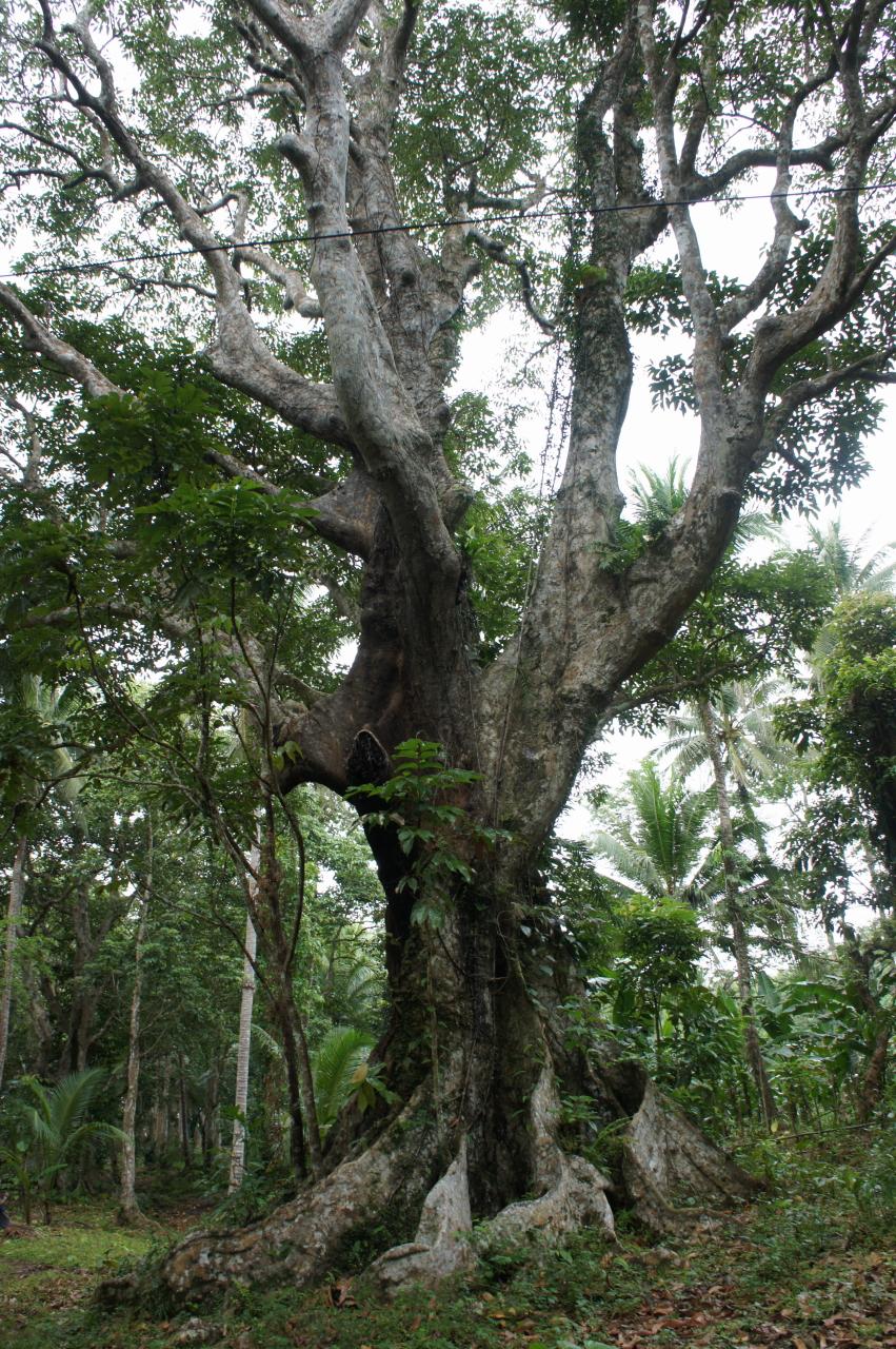 flora and fauna bulusanruralvagabond page 3