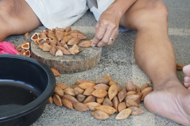 Proper positioning of the pili nut is necessary before hitting the shell with a whack from a bolo.