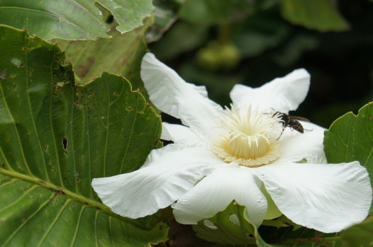 Palali Flower
