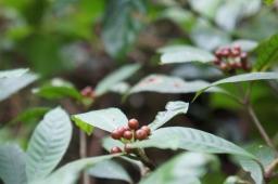 BVNP flora