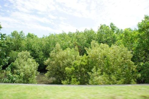 Remarkable mangroves of Barcelona
