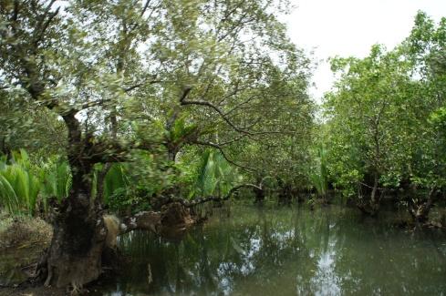 Mangroves along Barcelona road