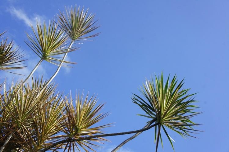 Bulusan ornamental flora