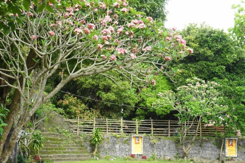 Punta Diamante main grounds with flowering trees just in time for the Lenten season.