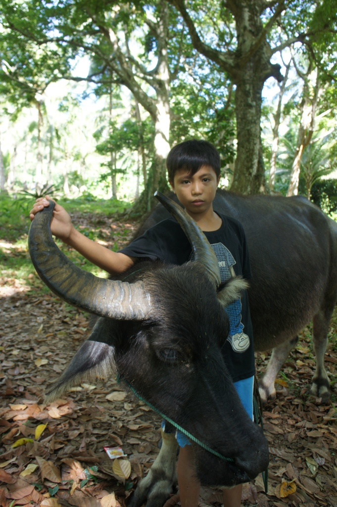A close bond because the carabao is family says his father, Joseph.