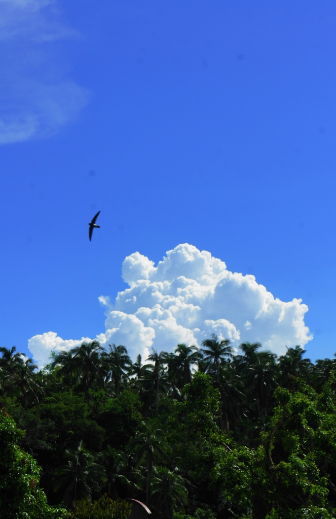 Mid afternoon solo flight, Bulusan, August 2014
