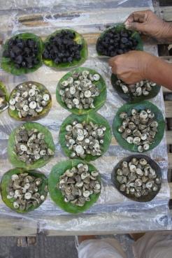 Live seashells (kadudodudo shells with the lighter color) from Gubat, Sorsogon
