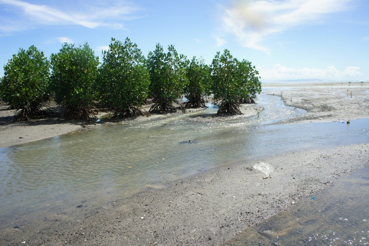 Surviving mangroves of Taisan